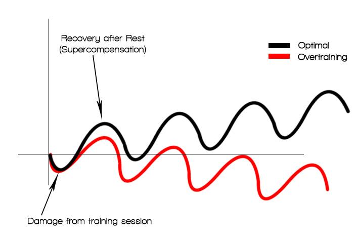 training response curve